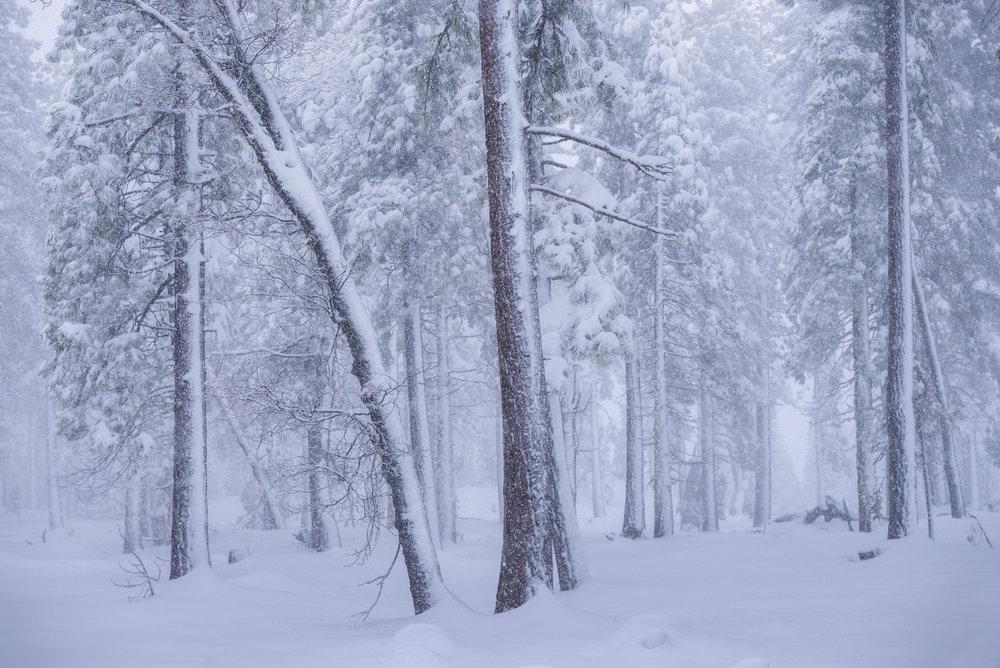 Narnia's Winter