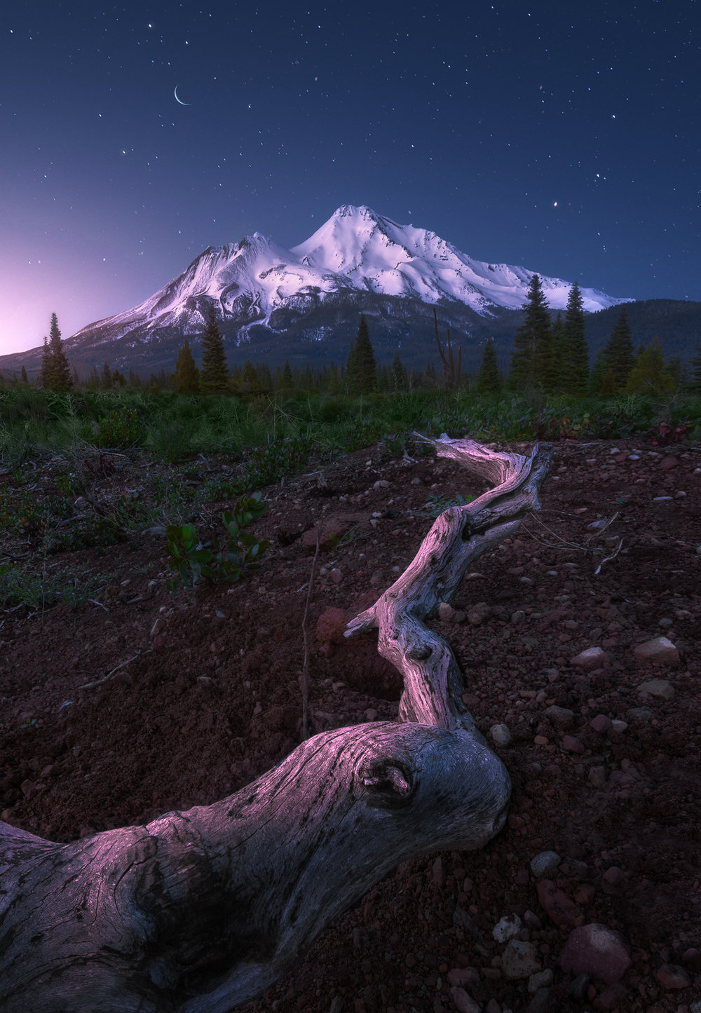 Shasta Dream