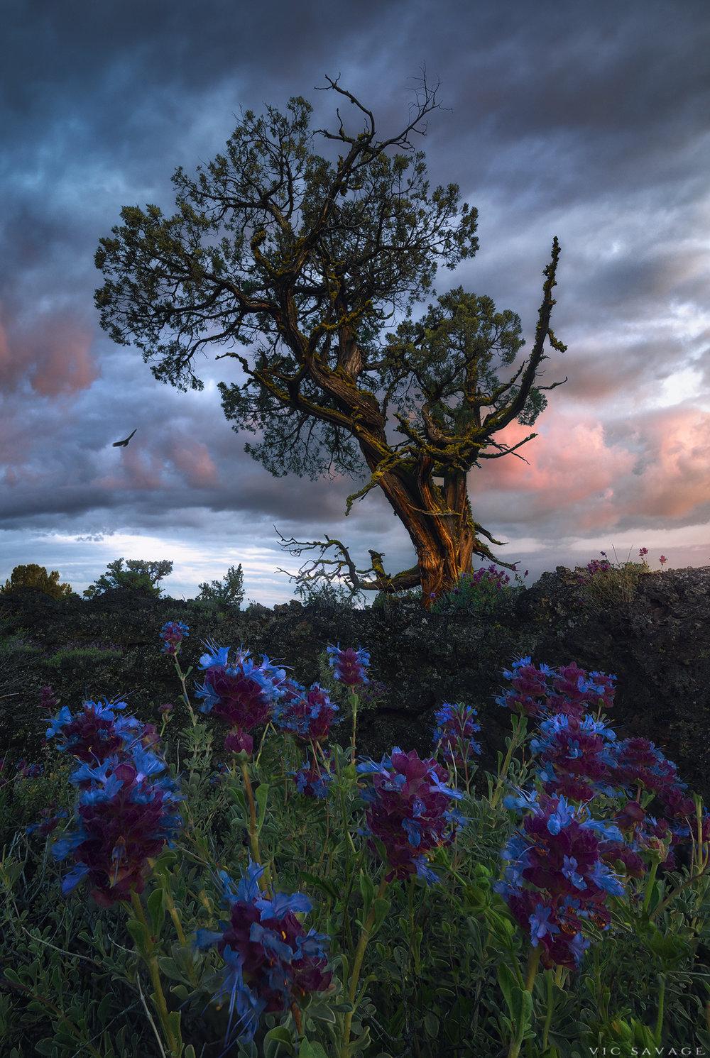 Lava-Tree.jpg