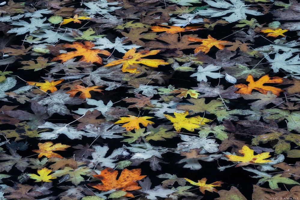 Water-Leaves-B.jpg