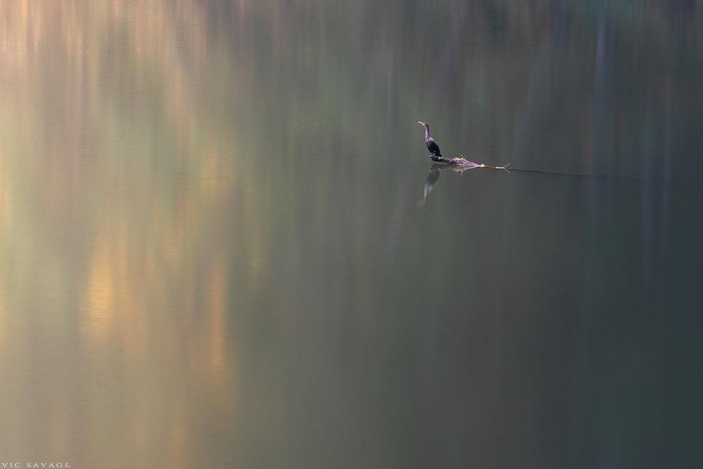 Lacamas-Bird.jpg