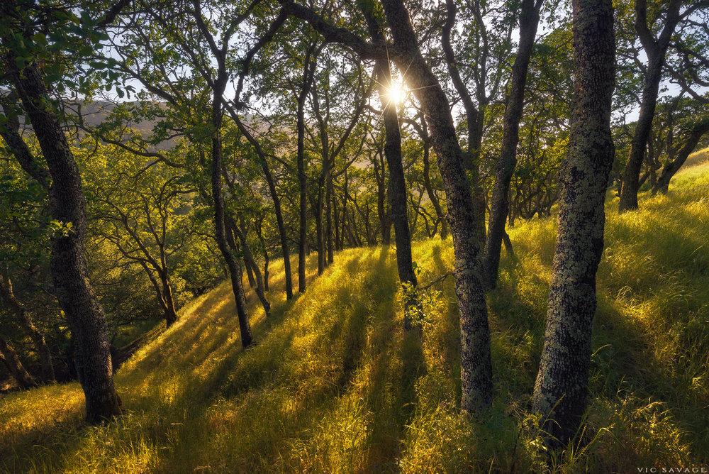 Briones_Woods_Spring.jpg