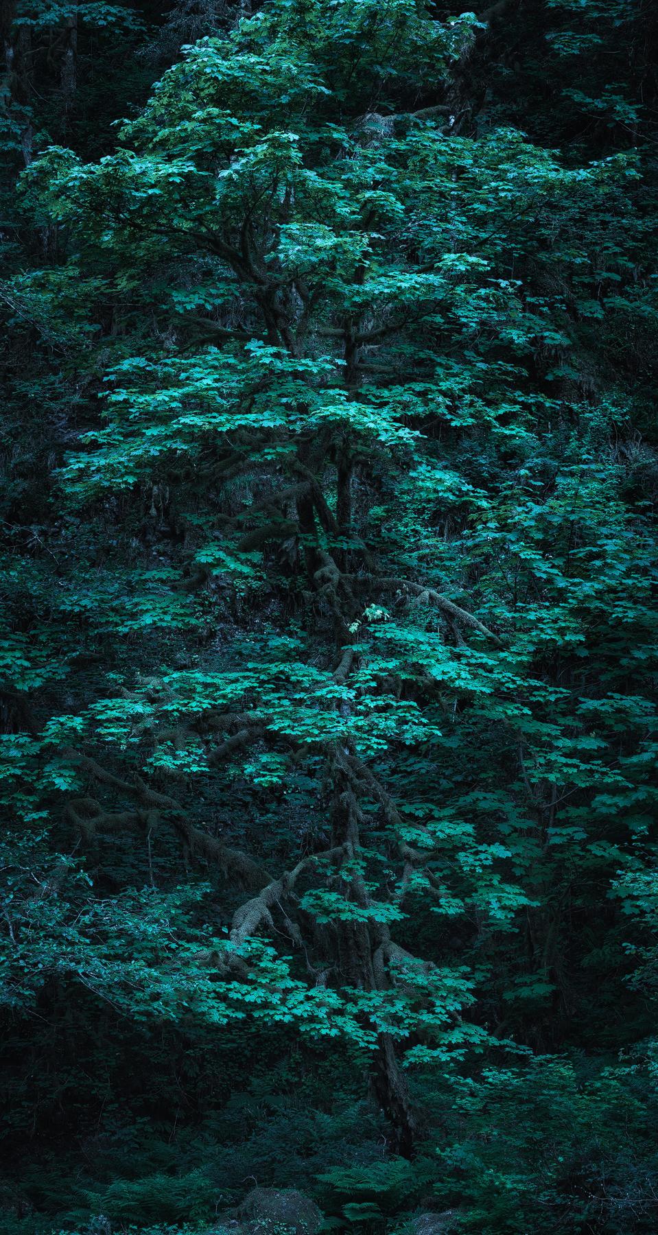 Bird-Tree.jpg