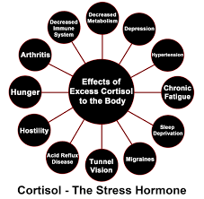 cortisol.png