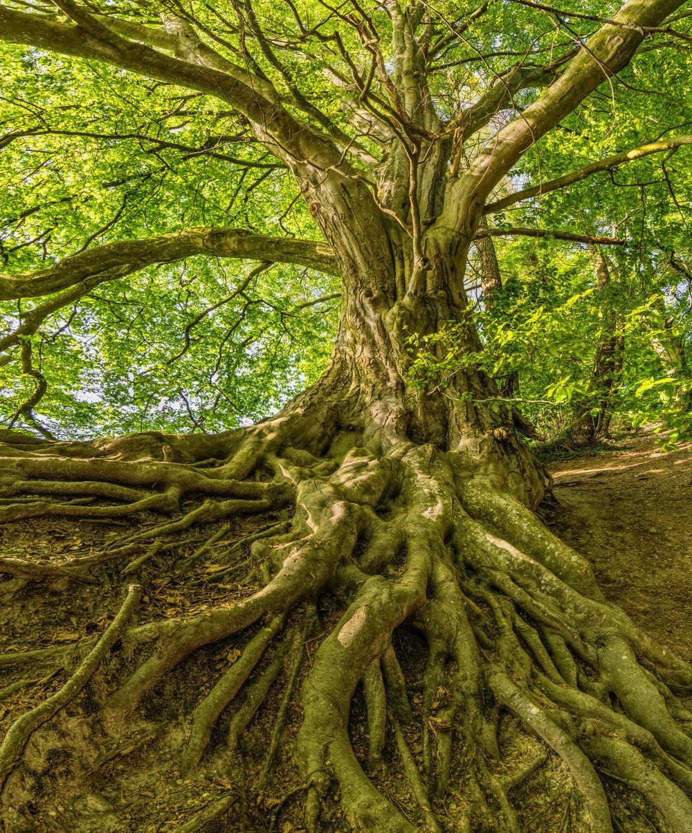 bark-beautiful-branch-1080401.jpg