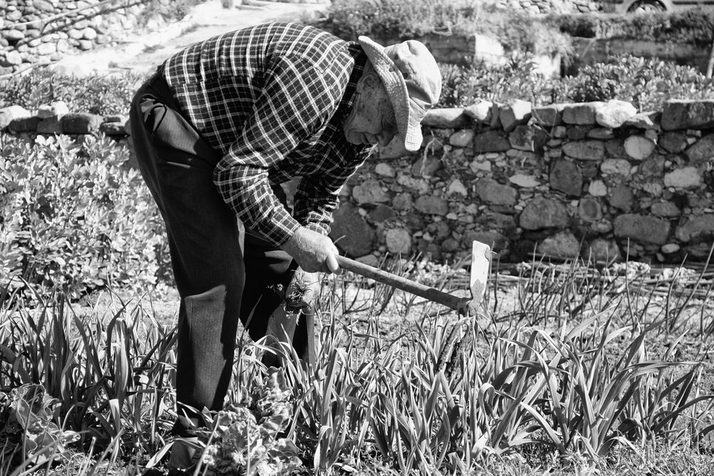 The Non-Gesture Project - Recovery of the Thermal Orchards in Caldes de Montbui    Printed Publication    Topos Magazine, Edition 97 Transformation   At the edge of the small town Caldes de Montbui in northern Spain lie orchards that receive water through an old Roman irrigation system. In disrepair for decades, the system has now been rebuilt in a collaboration between architects and users and opened to the public.