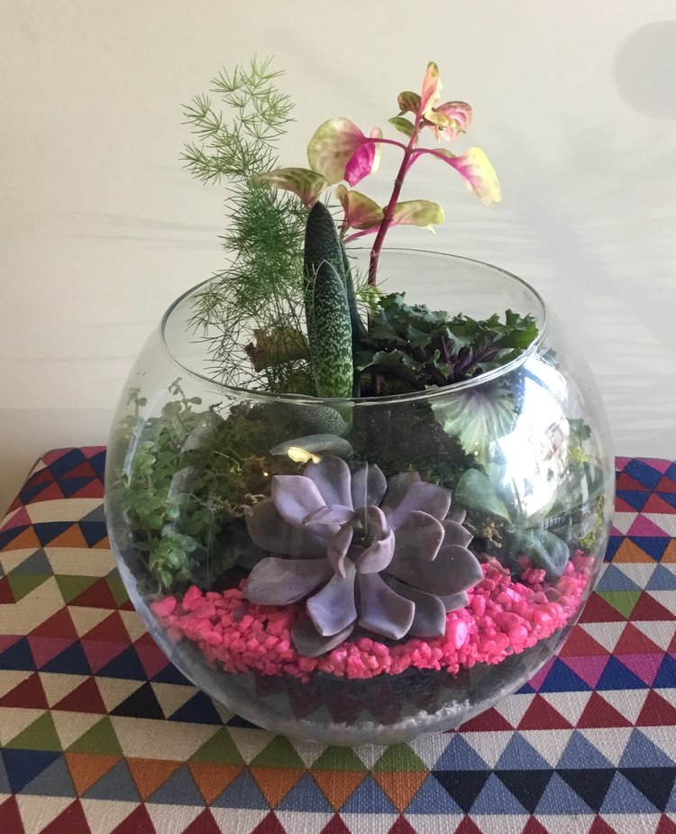 Lush And Lovely Succulent Terrarium Tigerlily Goods