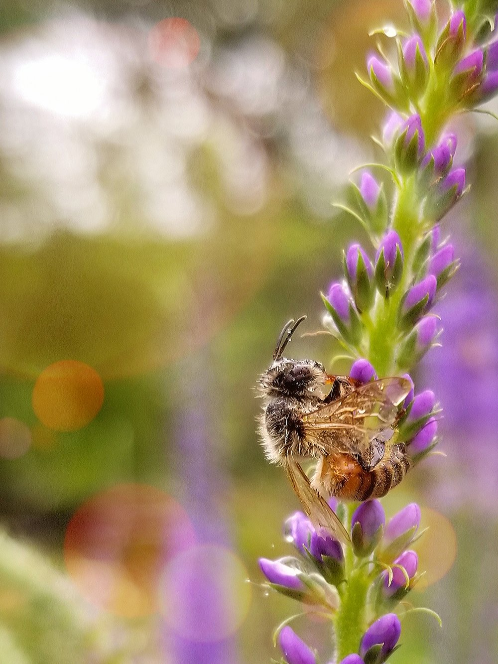 BEE AND FLOWER, WITH SUN GLARE