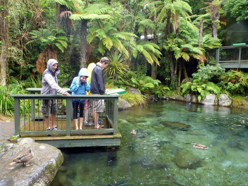 Rainbow Springs Nature Park, Rotorua