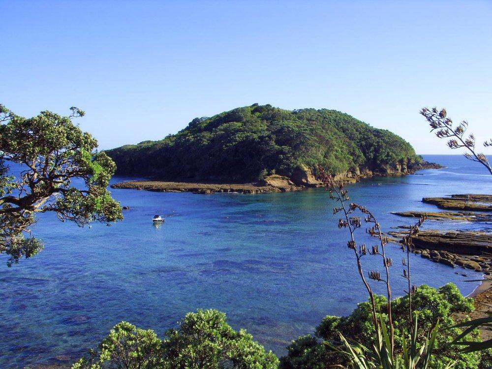 Goat Island Marine Reserve, Auckland