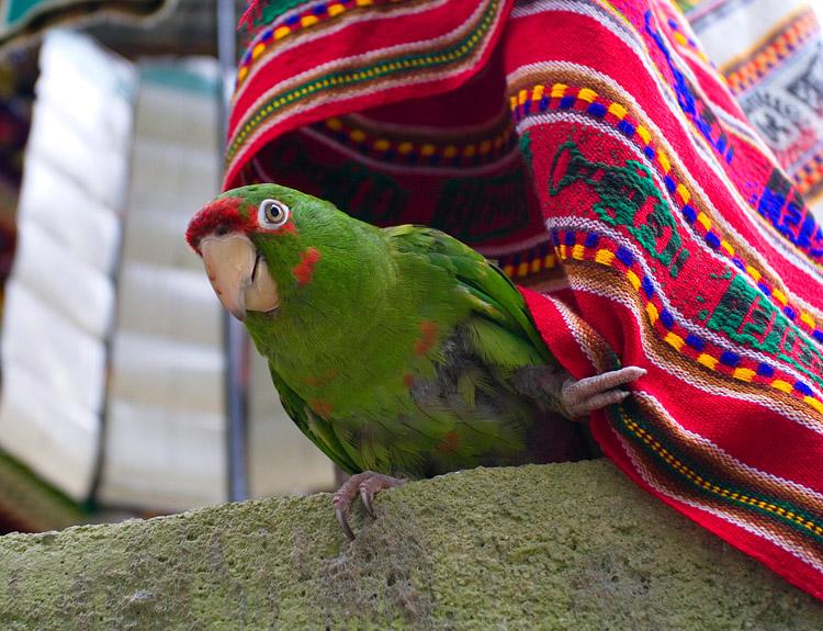 Aguas Calientes (Machu Picchu), Pierre-Léo Mongeon Bourbonnais, août 2006