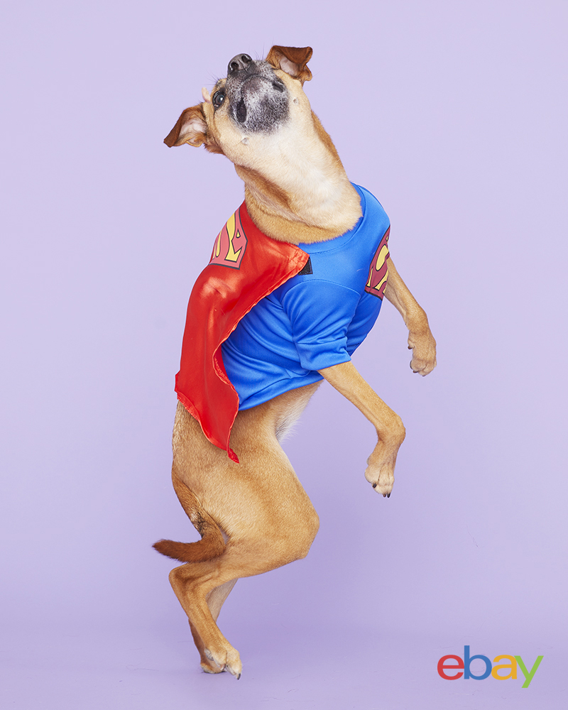EBAY_Halloween_Costumes_Pets_SuperMan_064 copy.jpg