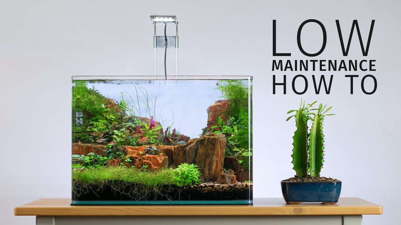 How To Keep An Aquascape Low Maintenance Tank Tested