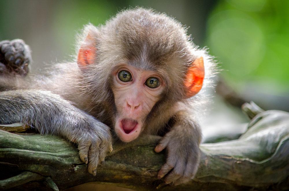 Volgens de laatste geruchten is er een nieuwe bewoner neergestreken in de Koude Keuken… King Kong maakt de buurt onveilig en daar moeten we iets aan doen! We hangen het aapje uit tussen 14 en 17u!