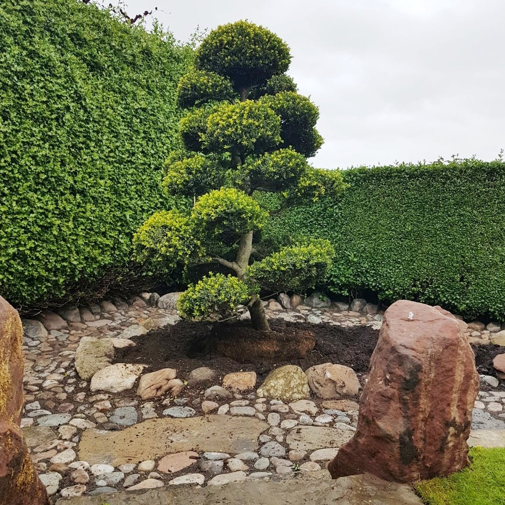 Japanese Bonsai - Ladybrook