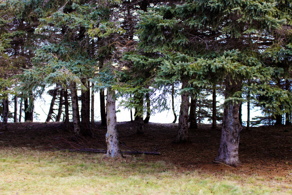 mclean trees.jpg