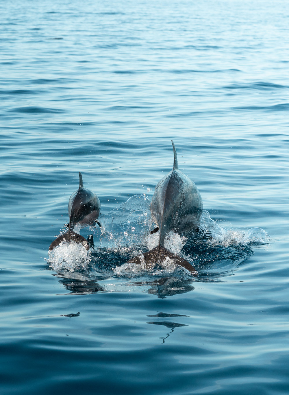Blogi kuva dolphin2.jpg