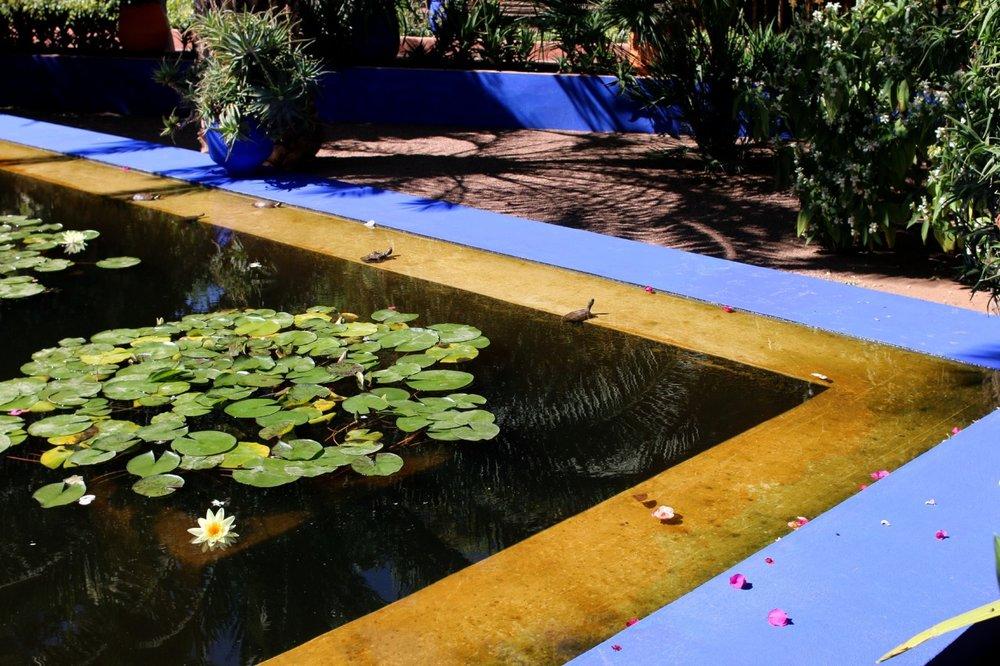 sunbathing turtles by the pond
