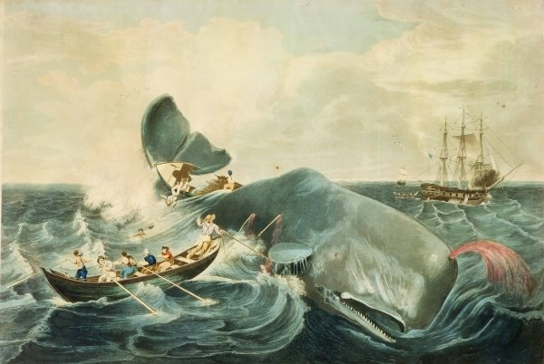 Moby-Dick-Whaling.jpg