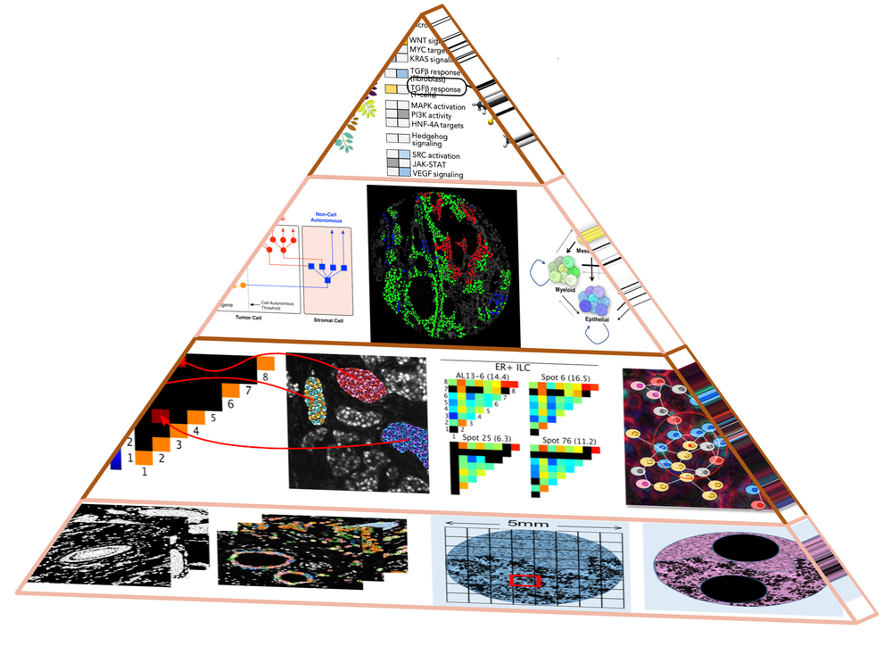Pyramid_v3_tumor.png