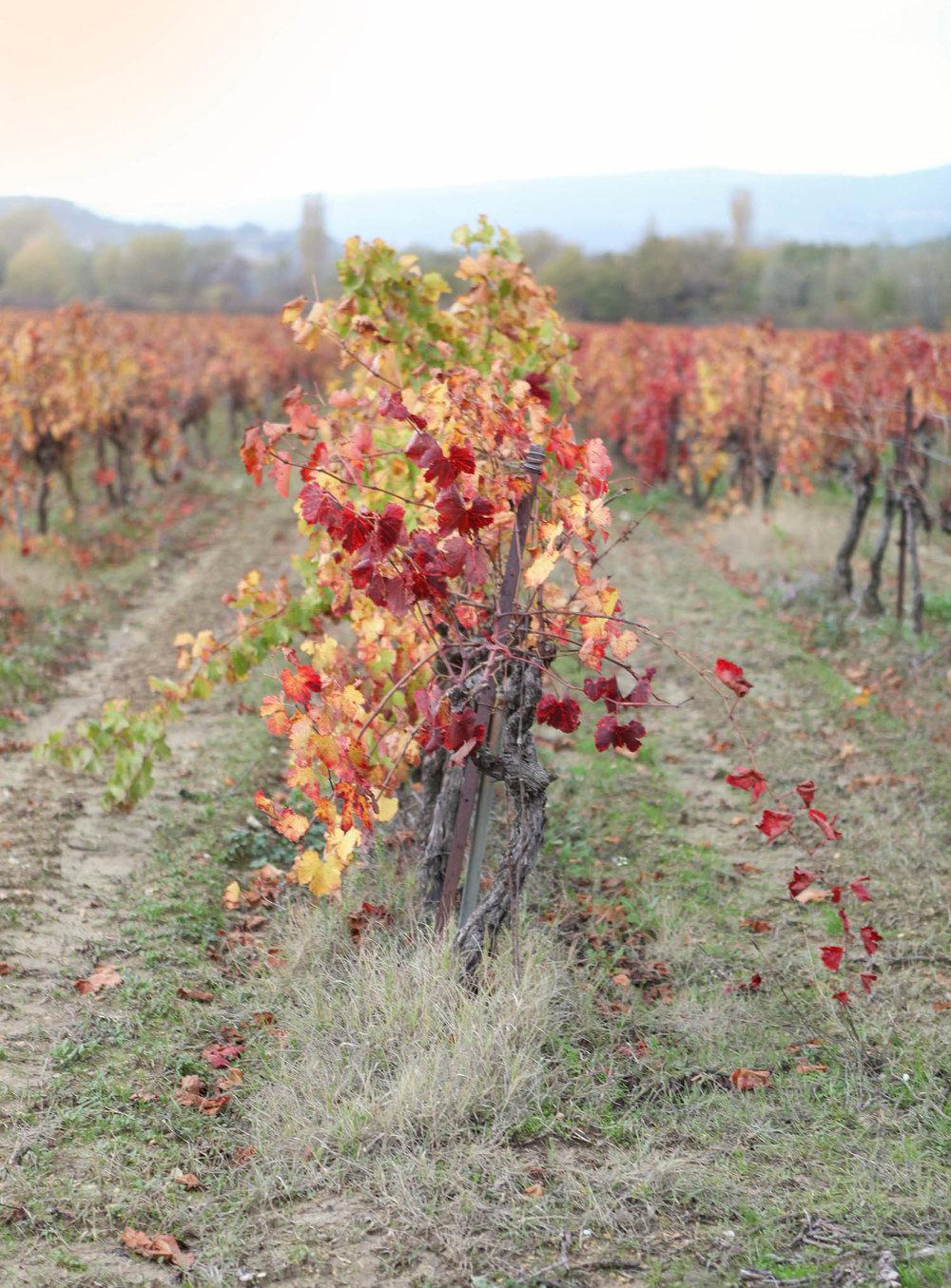 provence-fall-3.jpg