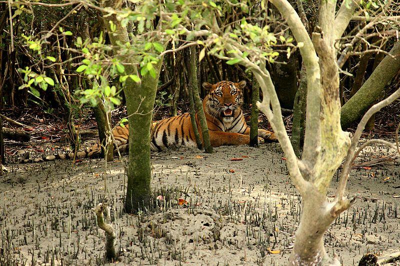 Sunderbans Tiger Reserve - Photo by David V Raju