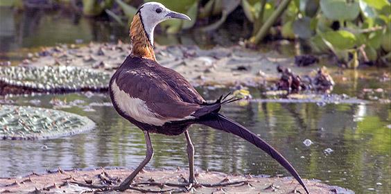 Raiganj Wildlife Sanctuary - Image Credit