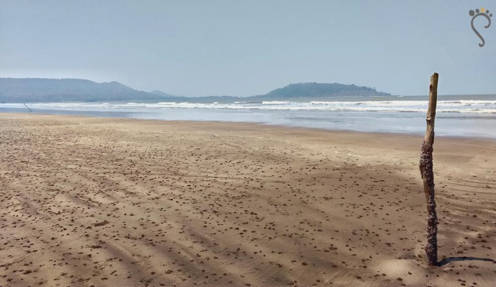 The black sand coastal strip of Revdanda