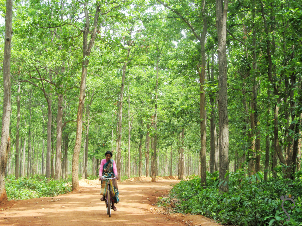 In the forests of Joypur, West Bengal. 2018