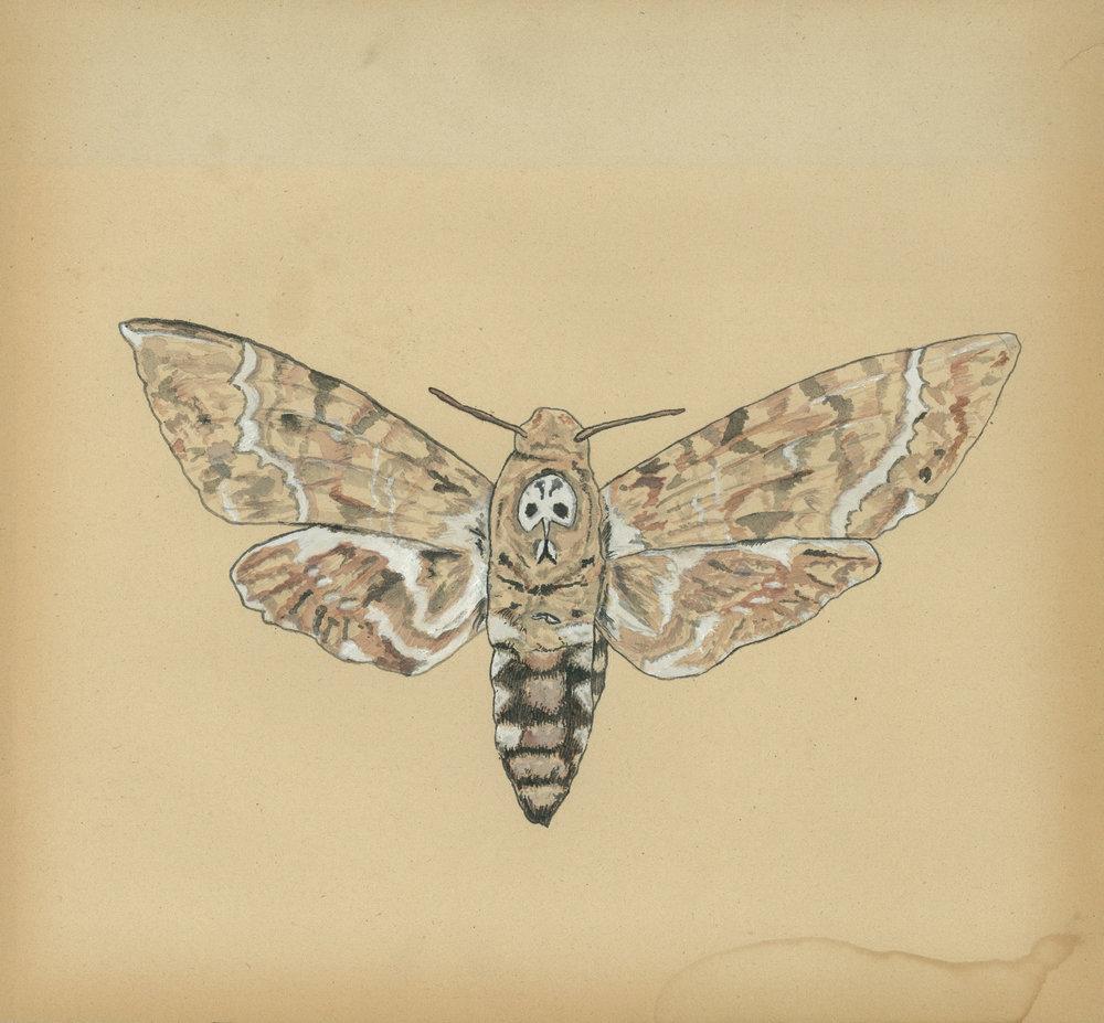 June moth painting.jpg
