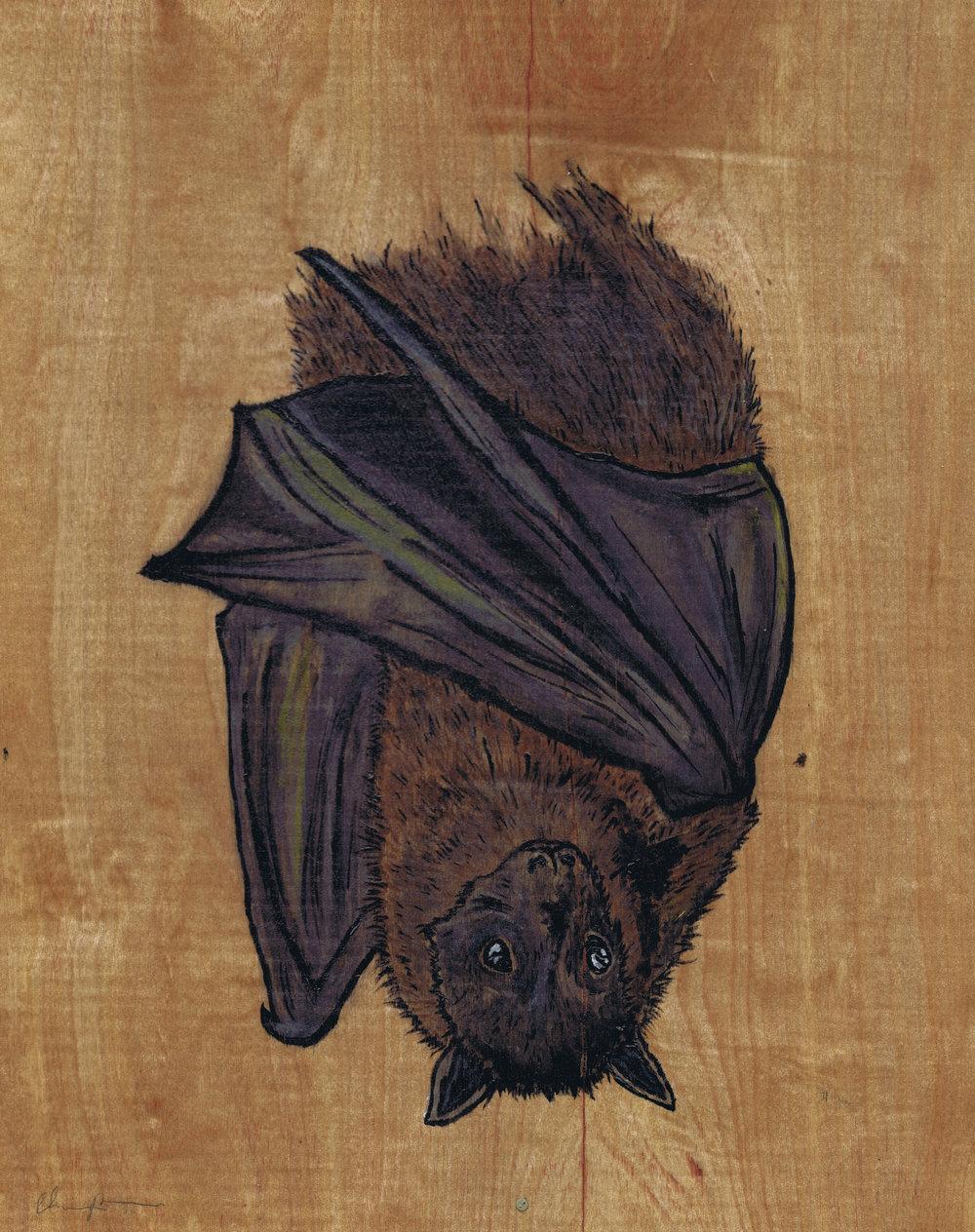 bat smaller.jpg
