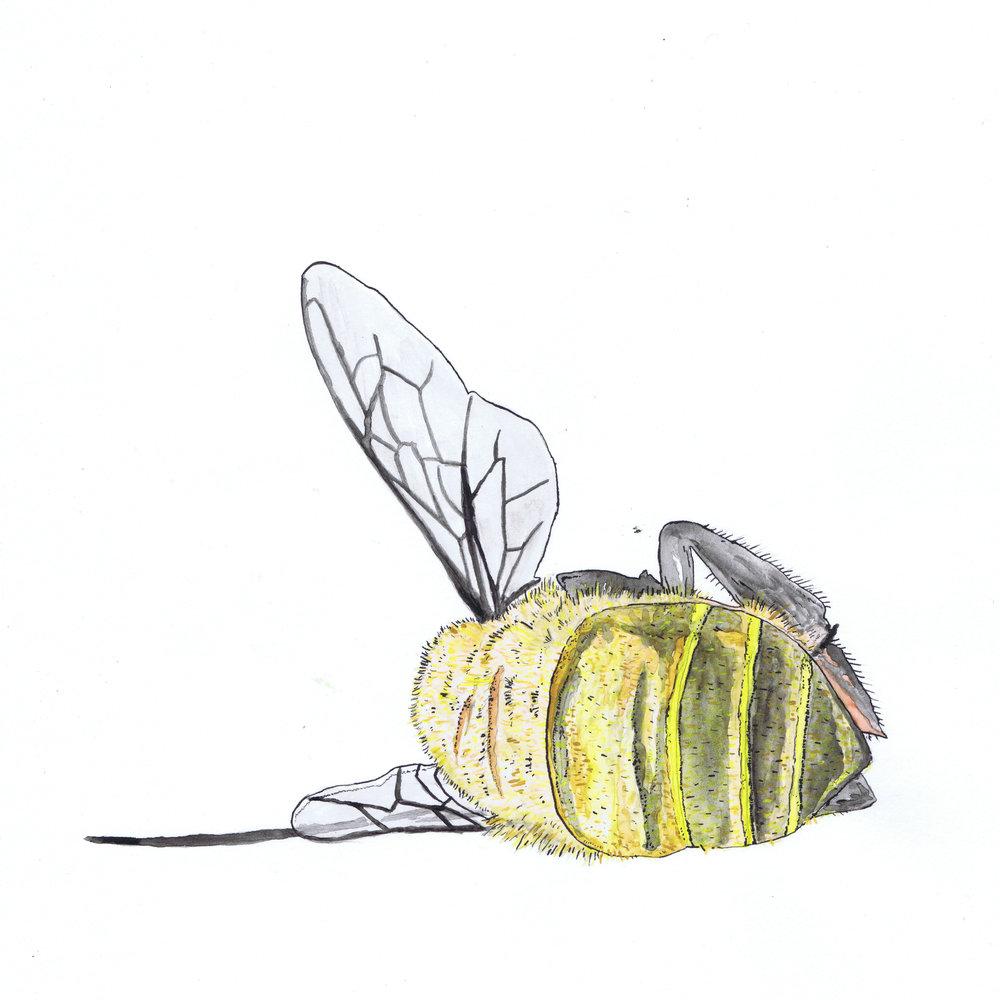 dead bee SCAN.jpg