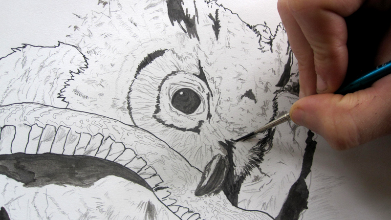 drawing owl.jpg