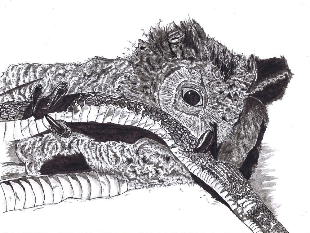 owl and snake.jpg