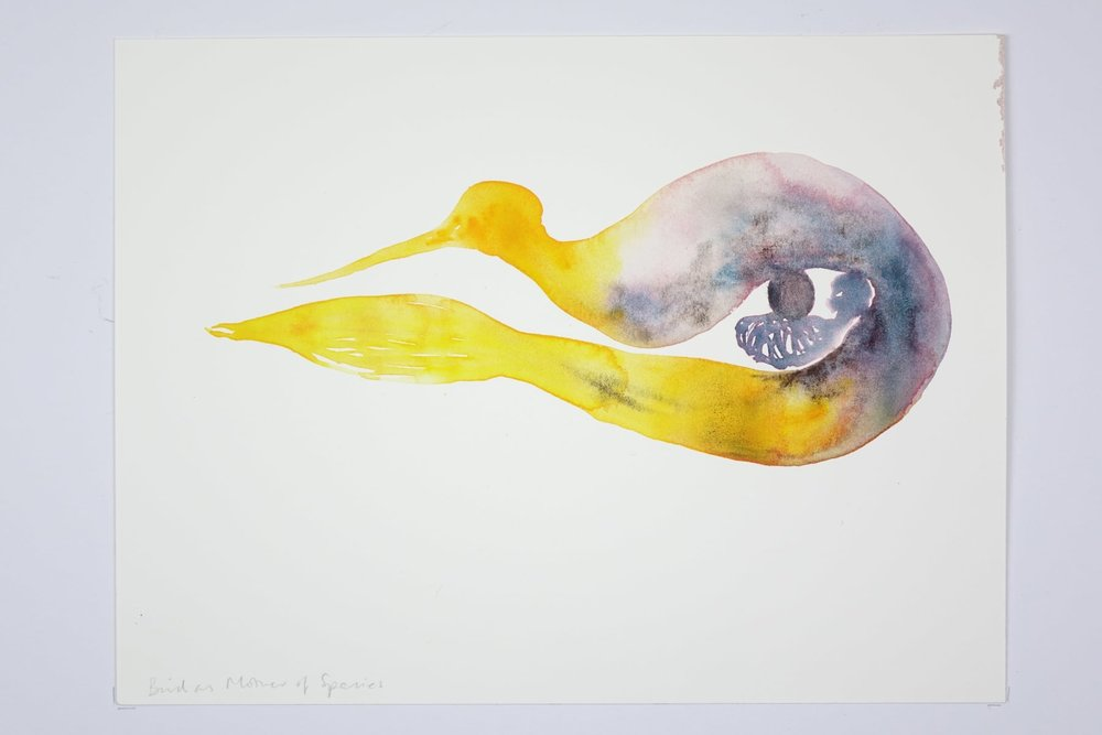 Kate Walters ,  Bird as Mother of Species , 2018, Watercolour, 23 x 31 cm