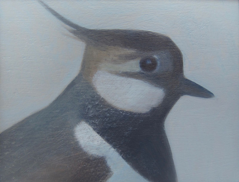 Jane MacNeill ,  Lapwing , (Oil on Board, image courtesy the artist/An Talla Solais Gallery).