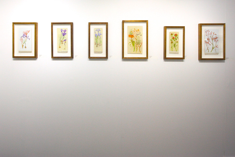 Jennifer Mcrae , Installation view, including, from left:  Mixed Specis ;  Spring, Crocii ;  Spring, Irises ;  Evening Scents ;  Lineage ;  Kangaroo paws . All oil on linen. (Photo: Ian McKay)