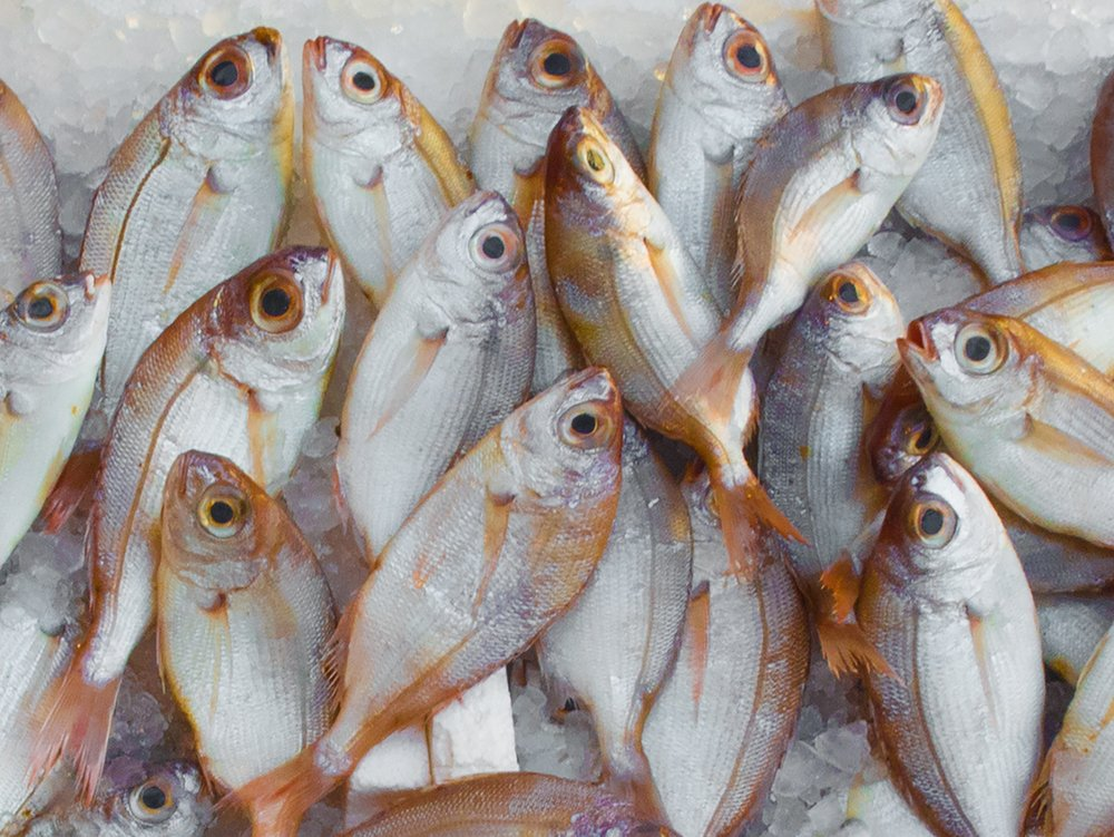 catch-fish-fish-market-229789 (1) (1).jpg