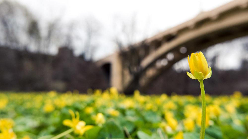 Little Yellow \ \ 4/3/17