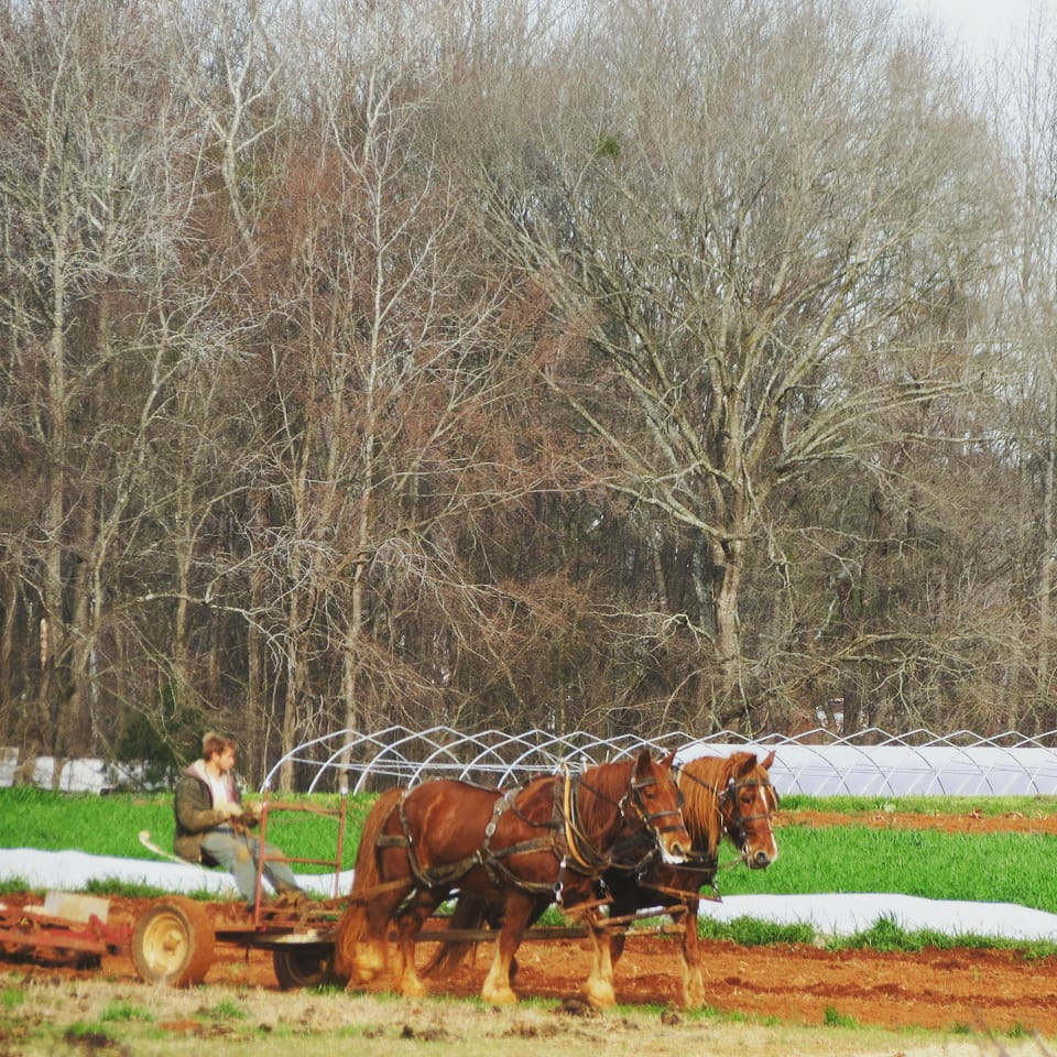 Perks - From now until May we're having a sale on our paid-in-full CSA options! We appreciate all our members who sign up early and we know you appreciate lower prices!In Addition to delicious produce each week, CSA members are entitled to a sleigh ride around the farm and surrounding woods during the wintertime! Bring the family or have a romantic getaway for two!CSA members are also allowed to visit the farm if they want to learn more about where their food comes from or want to hang out with their hardworking farmers. Our CSA members are the most important part of our business so we take time to meet your needs and make you feel included in the farm.If you end up having too few veggies each week or too many, we make it easy to change share sizes during the season, so you don't have to worry about choosing the wrong share for your needs.We are now offering delivery to customers who live in Lisbon, Sabbatus, Auburn, Lewiston or surrounding areas for an additional delivery fee. Getting local sustainably-grown produce directly from your farmer has never been easier!