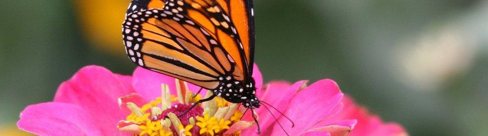 butterfly-17-1176597-1279x1050.jpg