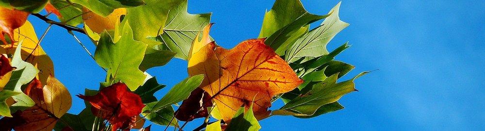 autumn-974882_1920.jpg
