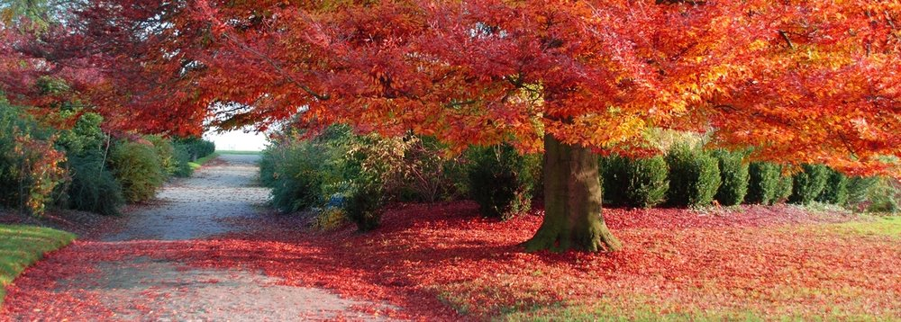 fall-1171254-1278x855.jpg