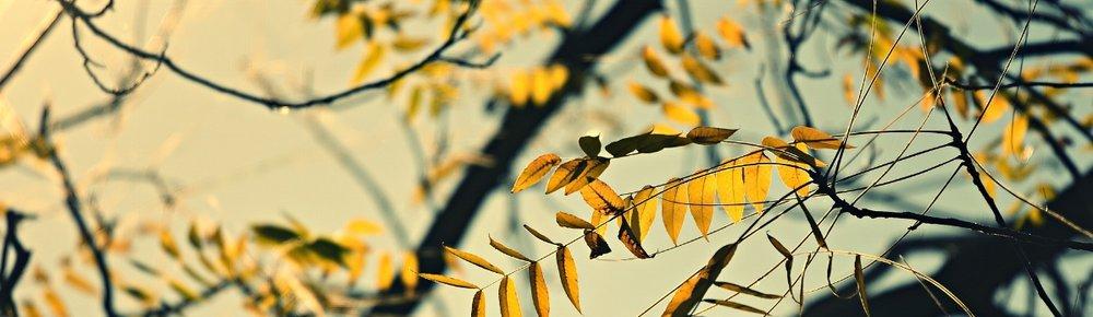branch-3784757_1920.jpg