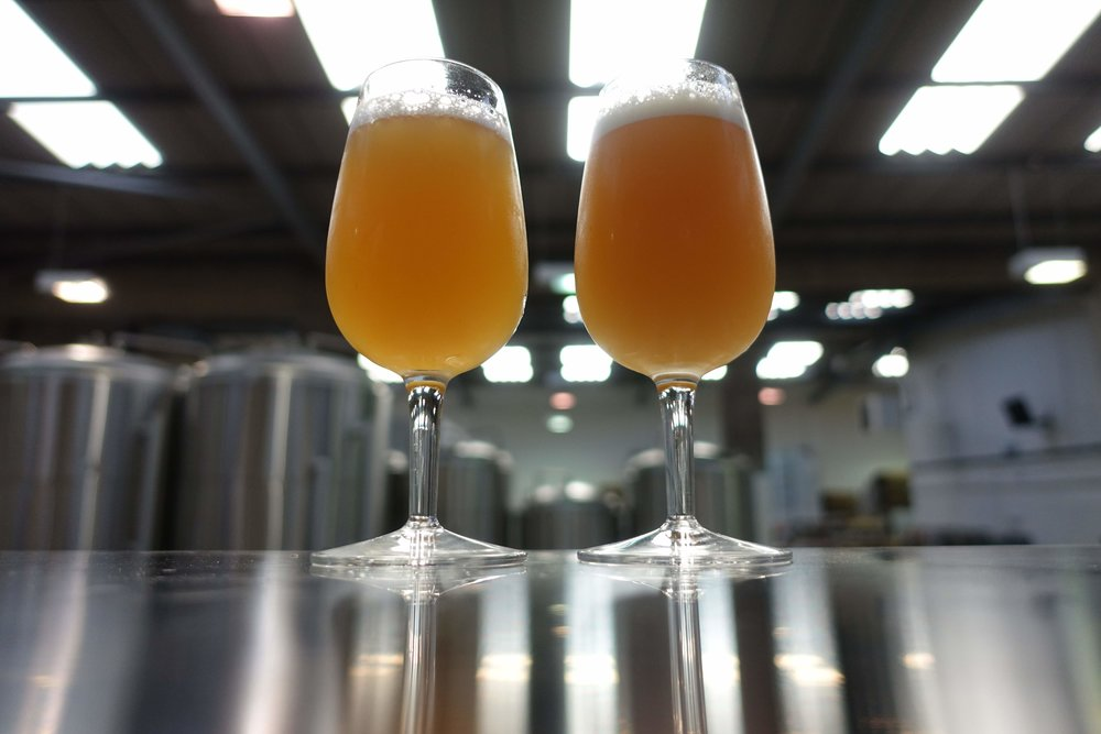 The DIPA and IPA as they are this morning, days away from being packaged. We're expecting the DIPA (left) to retain a significant hop haze, and and the IPA to be a little hazy in cask too. We like bright beer, as our track record thus far shows, but we're applying a lighter processing touch to these beers to preserve every bit of their hop flavour – we didn't put 70kg of aroma hops in each beer just to drag it back out with finings.