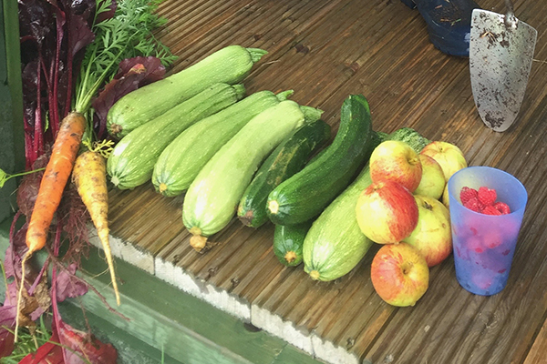 Harvesting our own veg | Restoring Connections