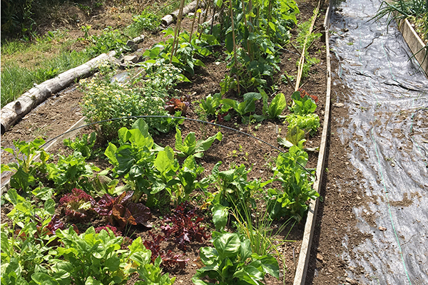 Growing our own veg | Restoring Connections