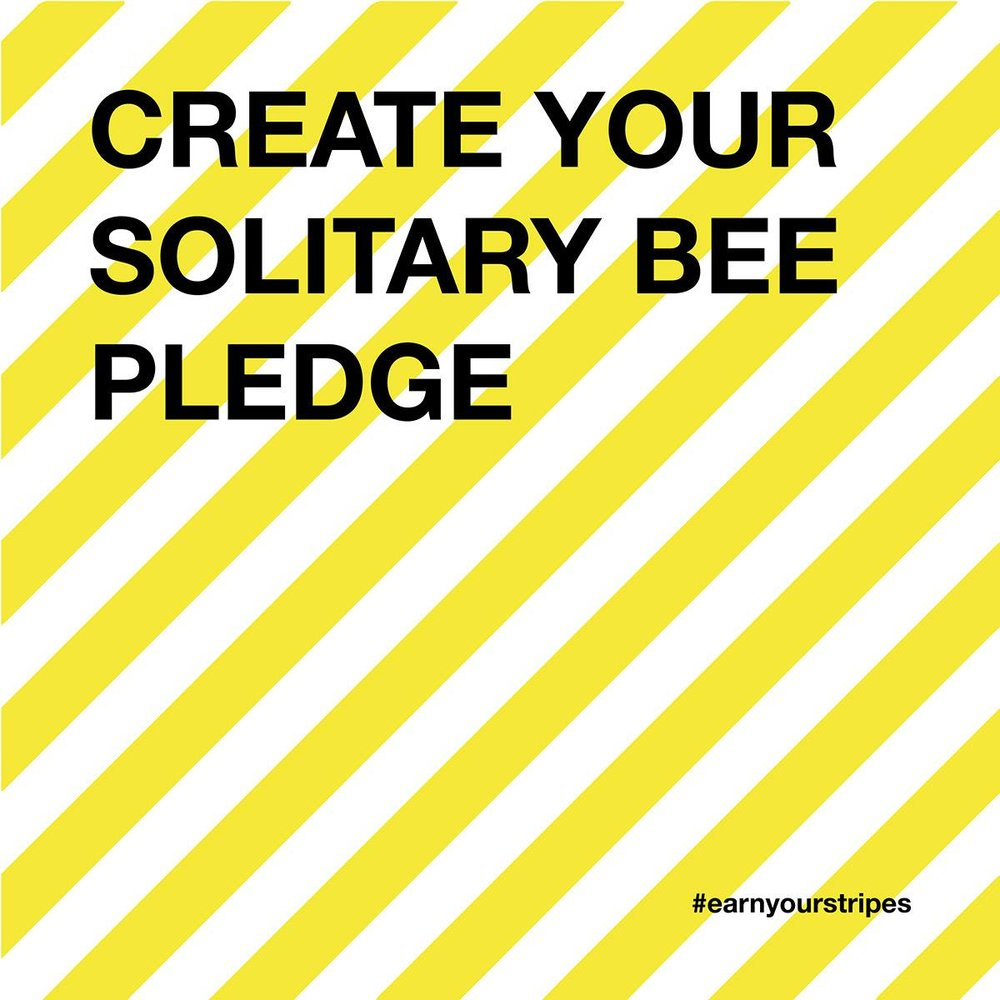 Solitary Bee Week - Creative Campaign