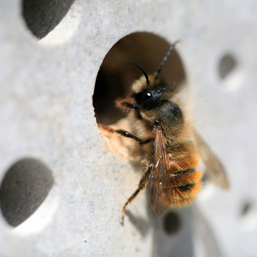 Solitary Bee Week - Creative Campaign
