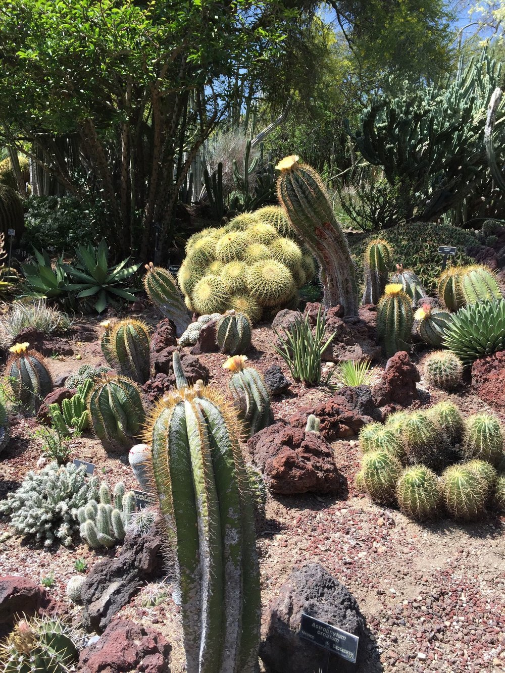 Huntington Gardens. Pasadena, CA